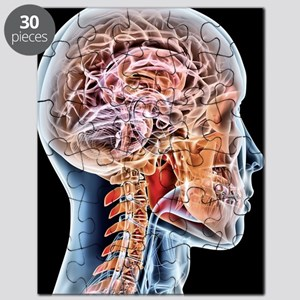 Internal brain anatomy, artwork Puzzle